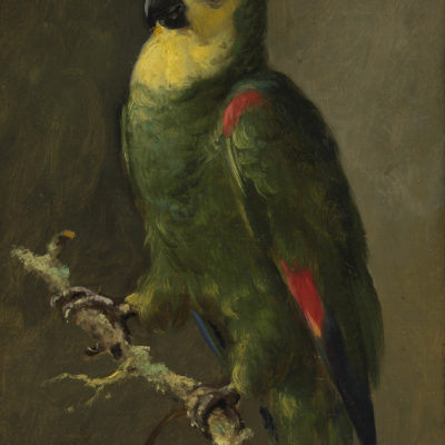 Otto Eerelman | Papegaai (Blauwhoofd Amazone) | Kunsthandel Bies